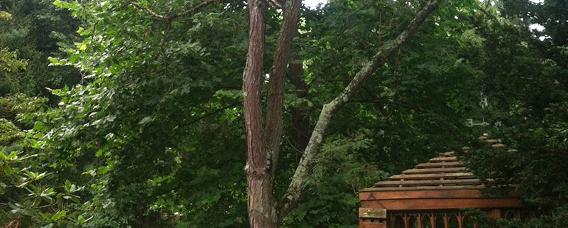 Tree Care and Removal