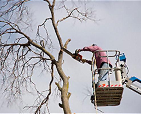 Winter Branch Removal