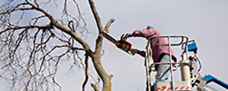 Winter Branch Removal